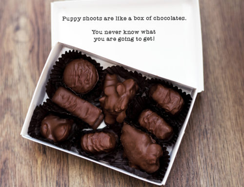 Puppy Shoots Are like a Box of Chocolates