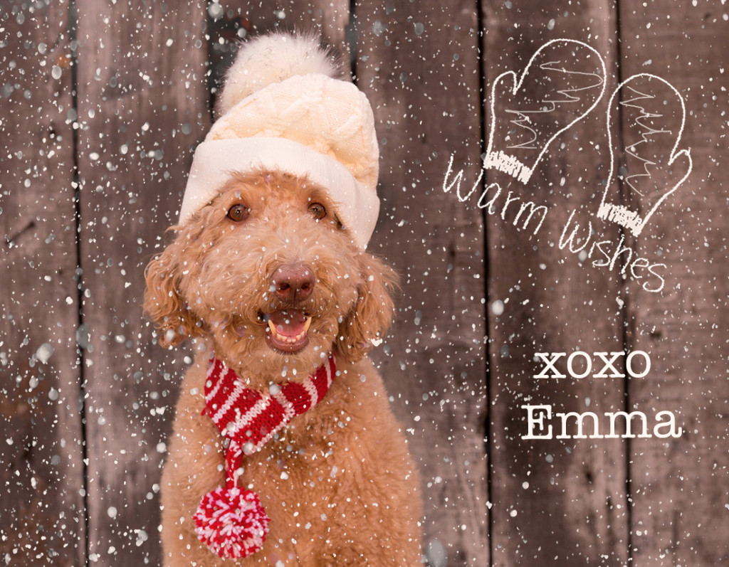 holiday photo ideas with dogs