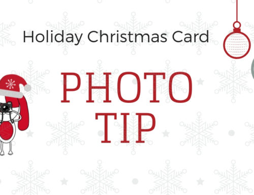Tips for Taking the Perfect Holiday Photos with Your Dogs