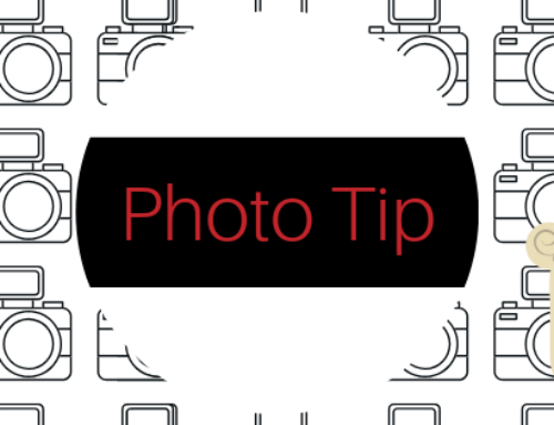 Dog Photo Tip + Delicious Dog Treat Recipe